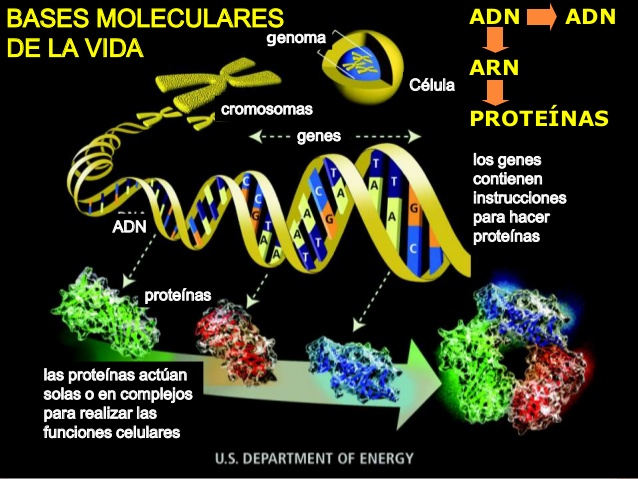 genetica-molecular-1-638.jpg